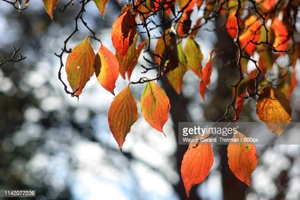 vintage autumn - wayne gerard trotman stock pictures, royalty-free photos & images