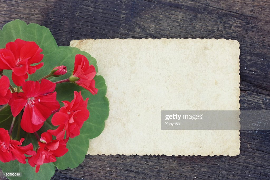 Vintage background with scarlet geranium : Stock Photo