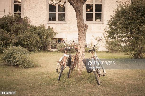 Vintage bicycles leaning against a tree