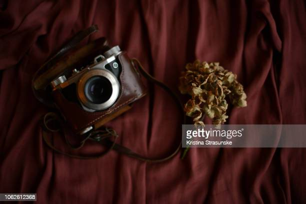 vintage camera in brown leather case and dry hydrangea flower on a silky background - bordeauxrood stockfoto's en -beelden