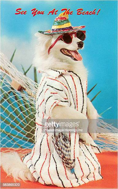 Vintage color photograph of a dog dressed in beachwear with a striped straw hat sunglasses and a striped terrycloth robe standing in front of netting...