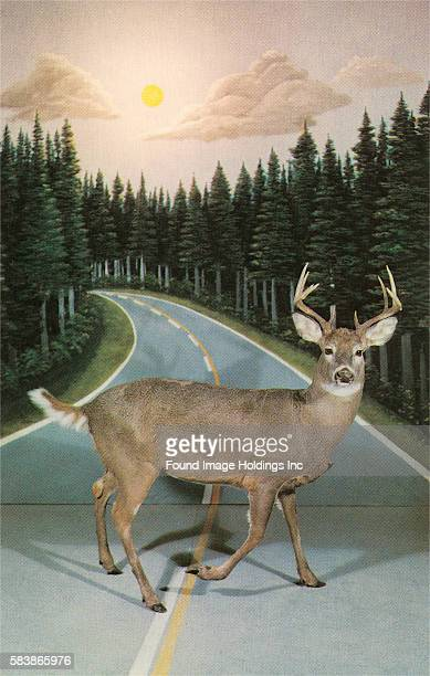 Vintage color studio photograph of a taxidermy buck staring at the camera crossing a painted backdrop of a twolane road curving off into a pine forest