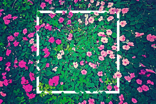 vintage effect photography of pink flowers garden with green leaves in background pattern with creative white frame border 940871408