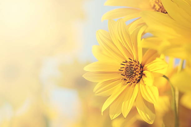 Free yellow flower background images pictures and royalty free garden flowers over wooden background vintage flowers mightylinksfo