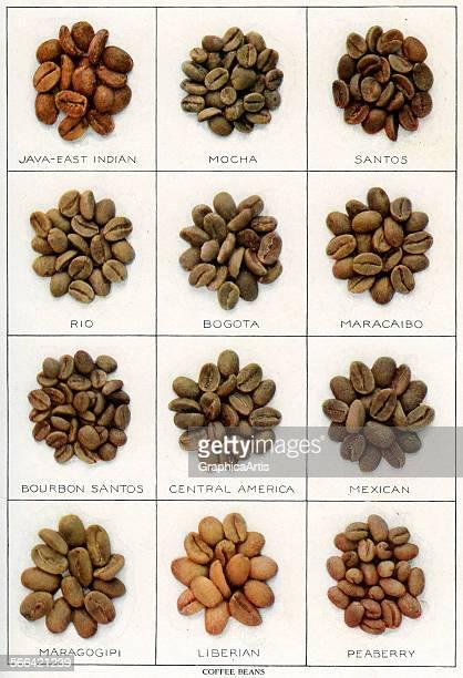 Vintage illustration of twelve varieties of coffee beans screen print 1911