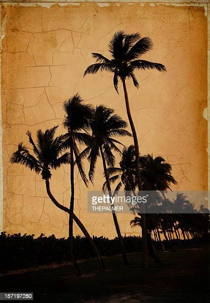 vintage árvores de Palma