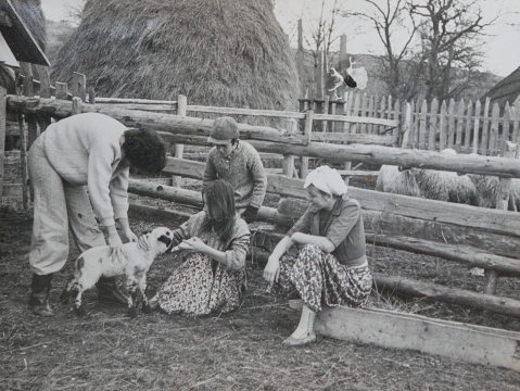 Vintage photo of children feeding little lamb - gettyimageskorea