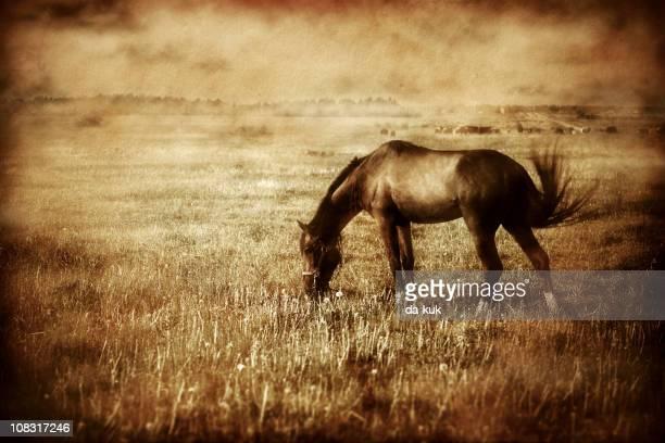 Vintage photo of horse