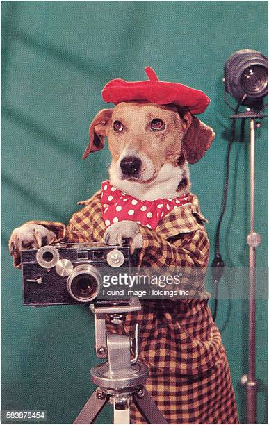 Vintage photograph of a dog wearing a red beret red polkadot ascot and brown checkerboard suit while operating a camera in a photo studio in the 1960s