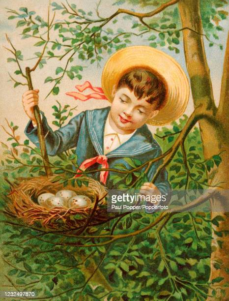 Vintage postcard illustration featuring a little boy wearing a sailor suit and a straw boat discovering a nest of birds' eggs, circa 1900.