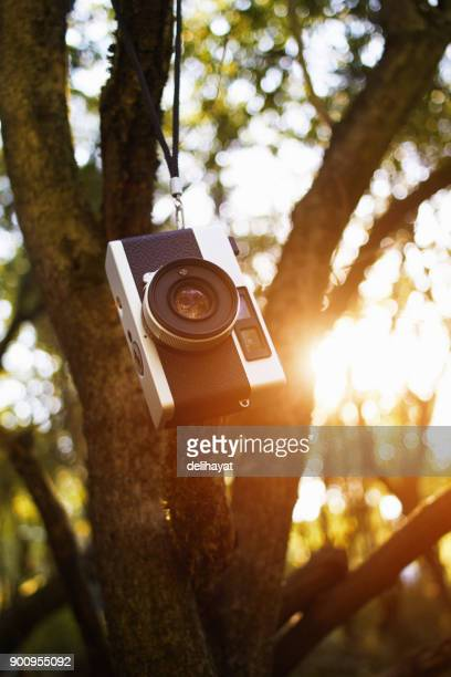 vintage rangefinder film camera hanging on a tree branch - photographic film camera stock photos and pictures