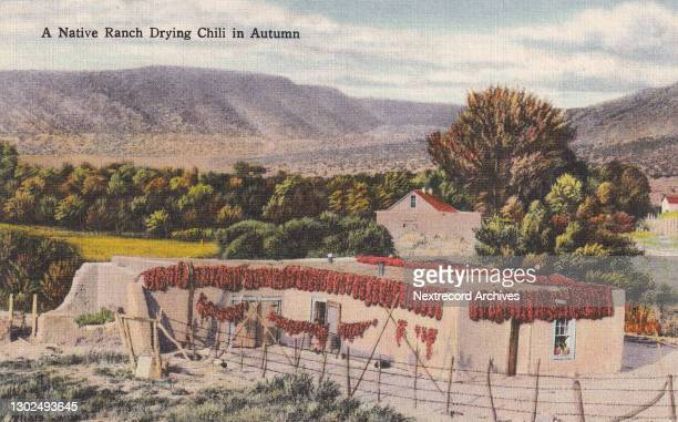 Vintage souvenir linen postcard published circa 1948 as part of a series, Greetings from New Mexico, depicting homegrown chili peppers drying in the...