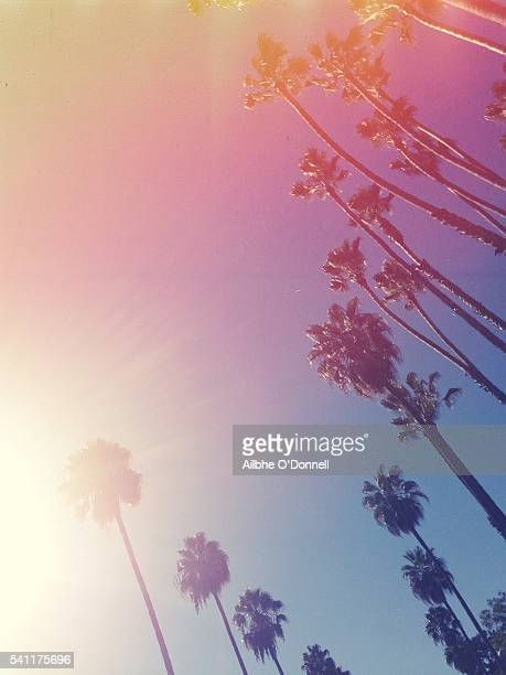 Vintage style palm trees, Beverly Hills, Los Angeles, California, USA