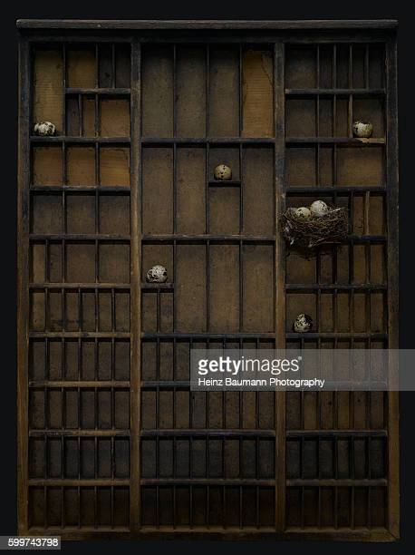 Vintage type set case with bird's nest and bird's eggs on black background