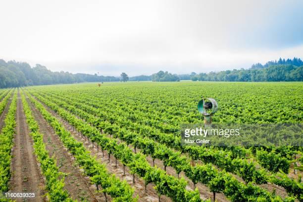 vinyard in healdsburg california - healdsburg stock pictures, royalty-free photos & images