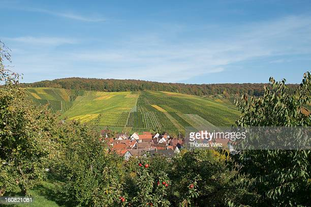 vinyards and apple orchard - orchard stockfoto's en -beelden