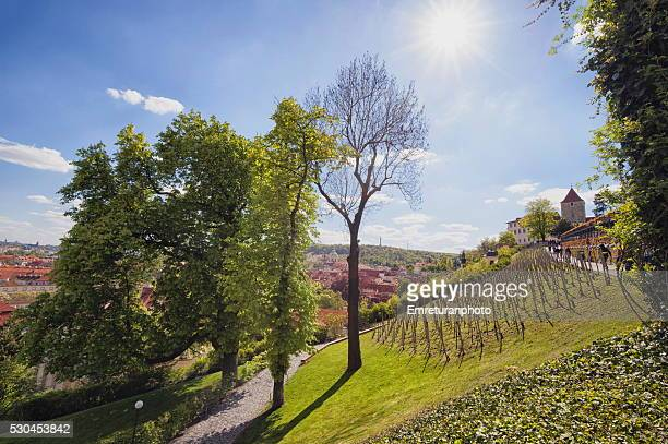 vinyards on the way to malostranska subway station,prague - emreturanphoto stock pictures, royalty-free photos & images