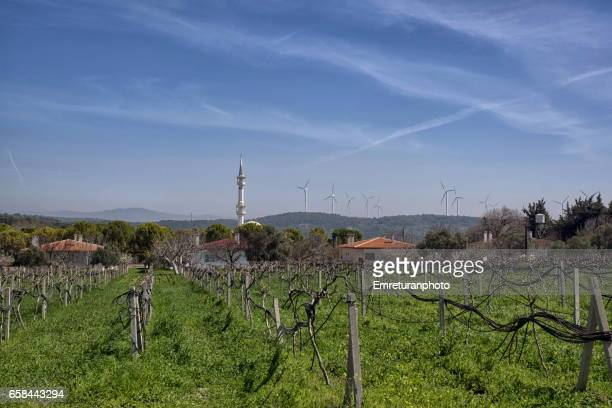 vinyards,mosque and windmills at kuşçular,urla. - emreturanphoto stock pictures, royalty-free photos & images