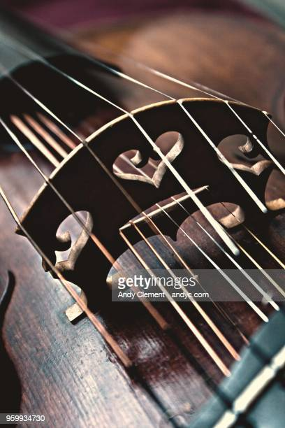 viola - andy clement stock pictures, royalty-free photos & images
