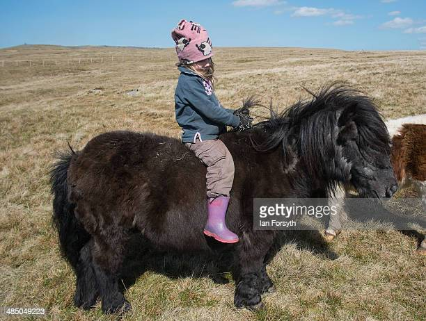 Violet Owen daughter of the Yorkshire shepherdess Amanda Owen sits on a horse as her mother feeds the others horses at Amanda's farm Ravenseat on...