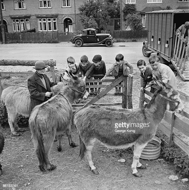 Violet Philpin introduces her charges to a group of young boys at the Helping Hand Animal Welfare League Donkey Sanctuary at Caversham near Reading...