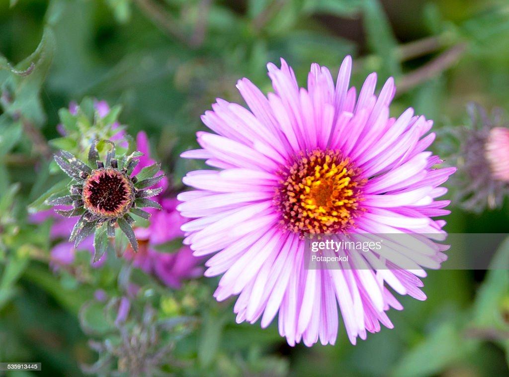 Violeta : Foto de stock