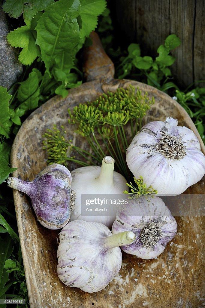 Violetto primavera aglio stile rustico : Foto stock