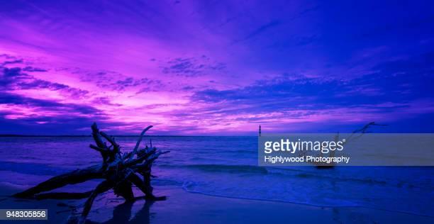 violet summer - highlywood fotografías e imágenes de stock