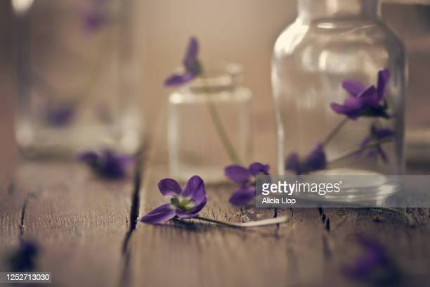 violets - ornamental plant stock pictures, royalty-free photos & images