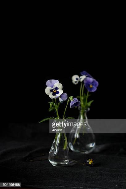 Violets, viola in vase