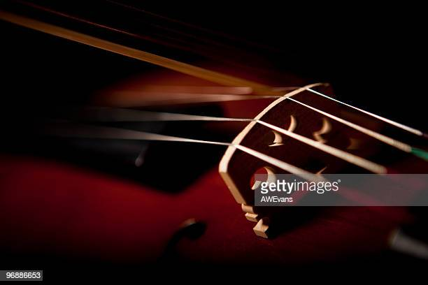 violin on black - stringed instrument stock pictures, royalty-free photos & images