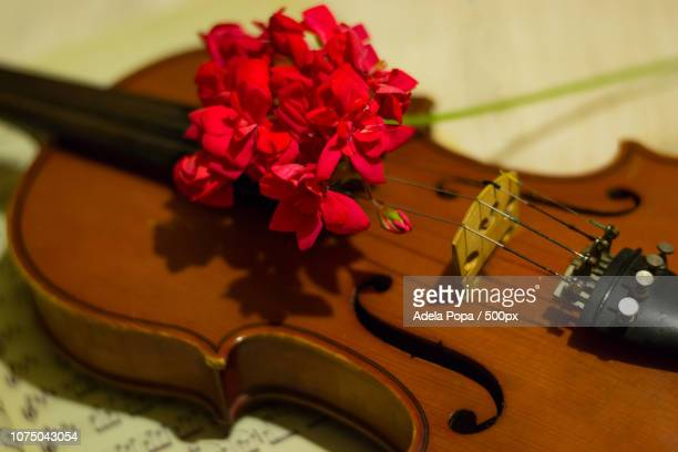 Violin with red flower
