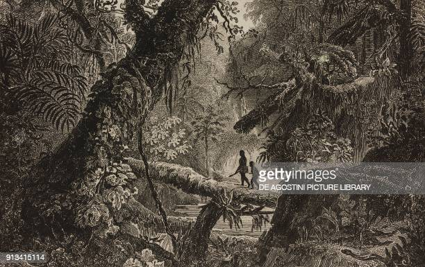 Virgin forest Gran Chaco Paraguay engraving by Danvin from Chili Paraguay BuenosAyres by Cesar Famin Patagonie TerreduFeu e Archipel des Malouines by...