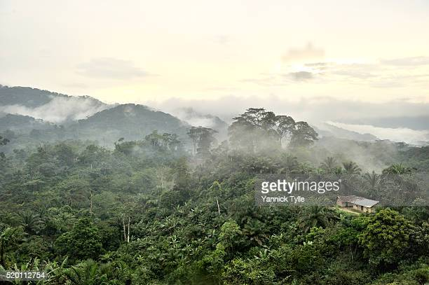 virgin forest in north kivu - tropical rainforest stock pictures, royalty-free photos & images