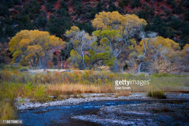 virgin river and zion fall color - don smith stock photos and pictures