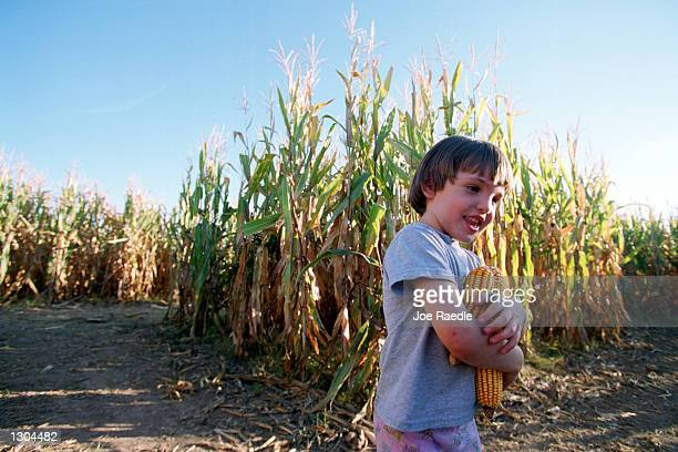Virginia Jenkins trys to find her way out of the 10acre cornfield maze October 19 2000 in La Union NM A local farmer who built the maze is one of...