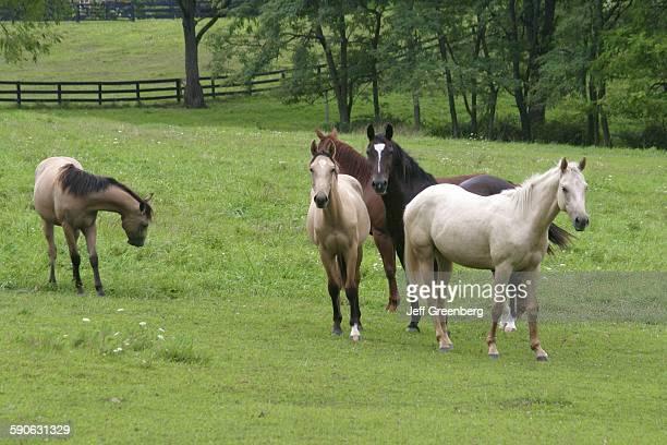 Virginia Leesburg Horses In A Pasture