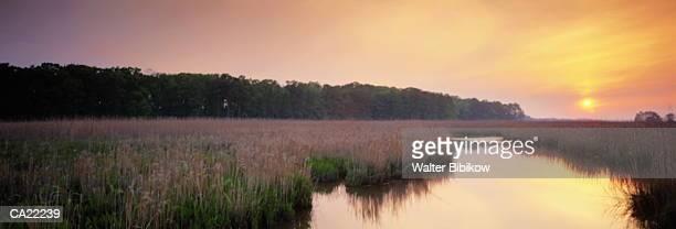 USA, Virginia, marsh, sunrise