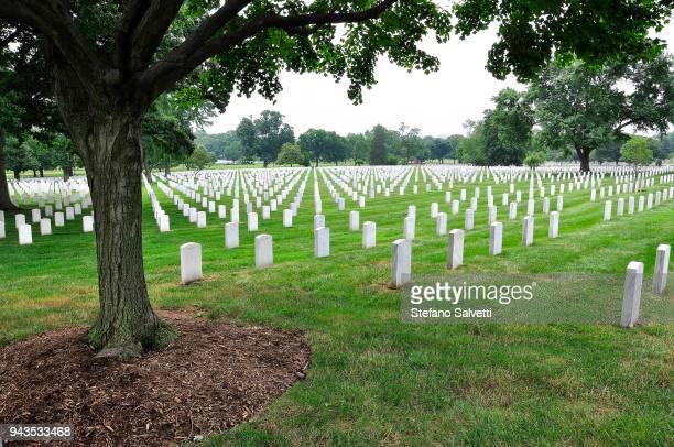 USA, Virginia, treee and tombs in Arlington Memorial Cemetery