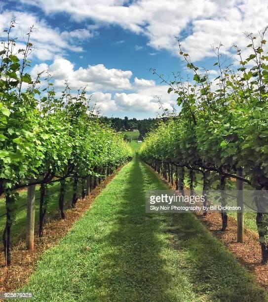 virginia wine - ワイナリー ストックフォトと画像