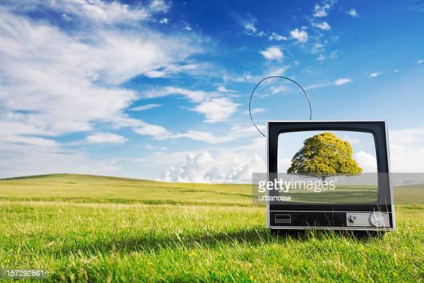 Virtual lone tree