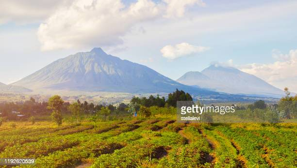 virunga mountains and volcanoes in rwanda - stellalevi stock pictures, royalty-free photos & images