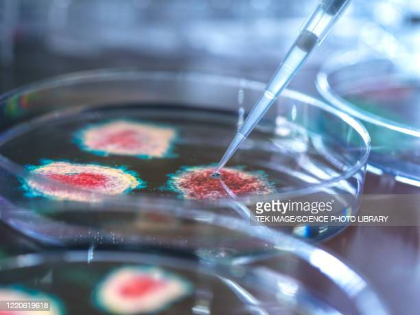 virus research - cultures stock pictures, royalty-free photos & images