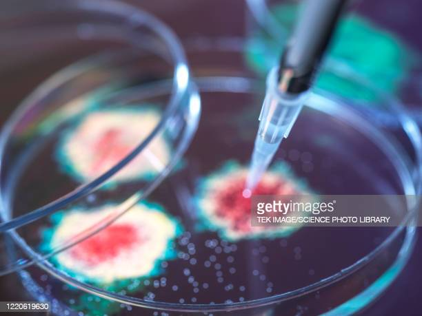 virus research - virology stock pictures, royalty-free photos & images