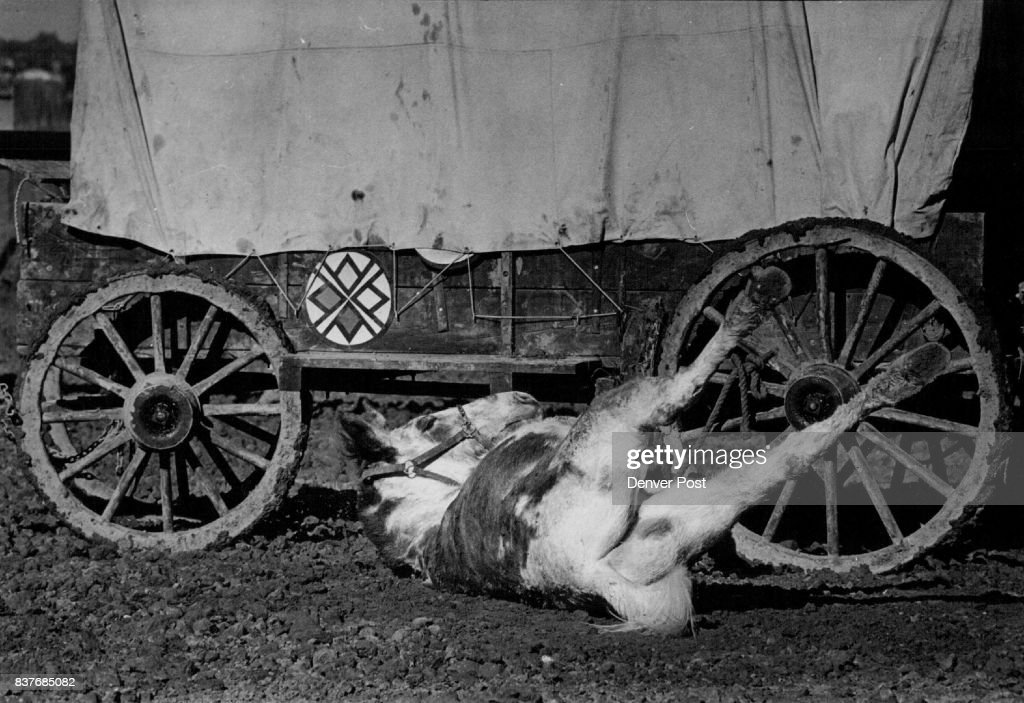 vision quest wagon train even this mules wanted to rest upon news photo getty images 2