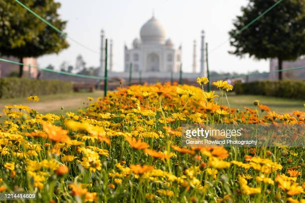visit india - celebrity death stock pictures, royalty-free photos & images