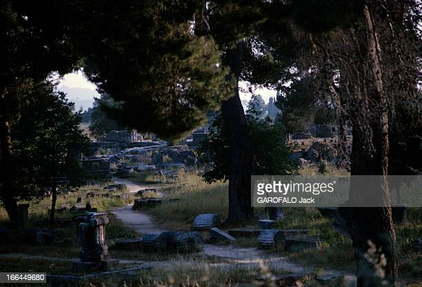 le site archéologique envahi par la végétation et les pins