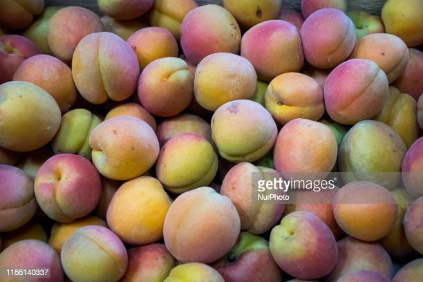 Visit of the farm quotLes Saveurs d'Irignyquot fruit and vegetable producers in Irigny in the south of Lyon France on July 11 2019 Metropolitan...