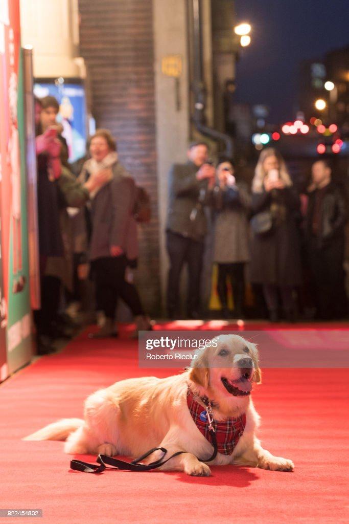Glasgow Film Festival - Opening Gala - 'Isle Of Dogs' UK Premiere : ニュース写真