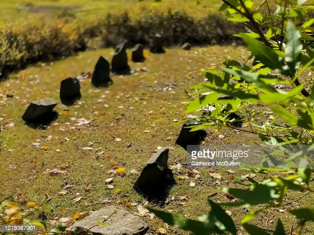 visit to a pet cemetery - euthanasia stock pictures, royalty-free photos & images